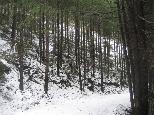Winter Bend in the Trail