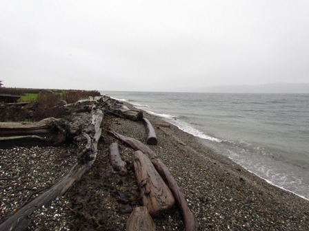 Camano Island Coast 1 by Tommia Wright