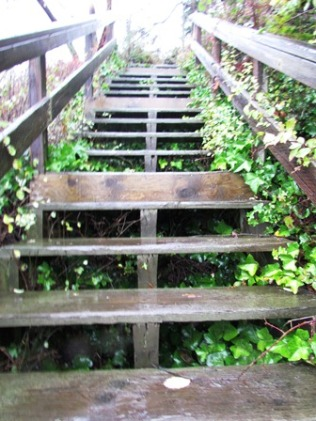 Steps at Camano by Tommia Wright