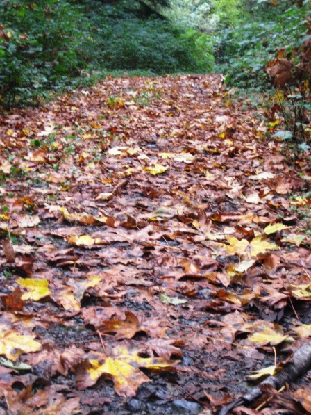Fall's Carpet by Tommia Wright