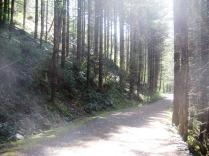 Trail in June