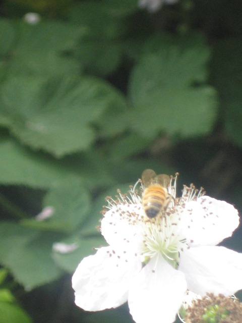 Busy Bee by Tommia Wright