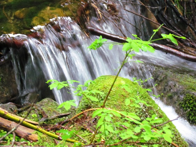 Falls along the McClellan Butte Trail by Tommia Wright