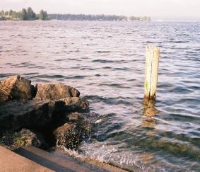 Splash Steps by Tommia Wright