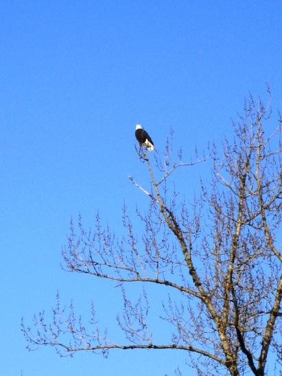 Eagle's Perch, Snoqualmie, WA -vrc -