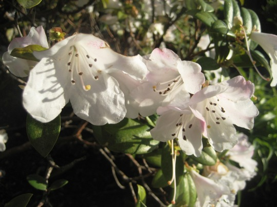 Whiteness of Spring