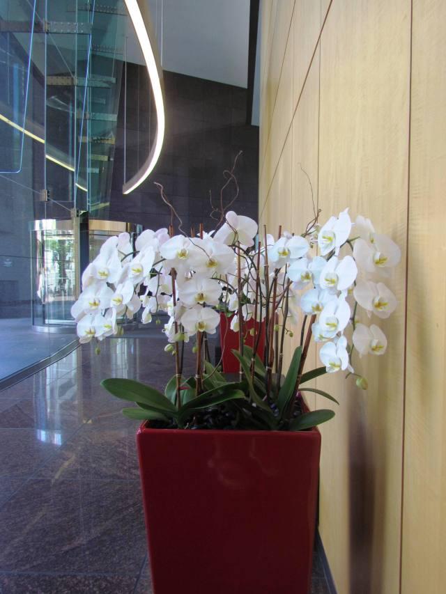 White Flowers, Red Vase