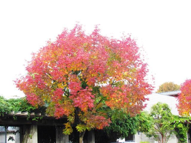 fall in issy