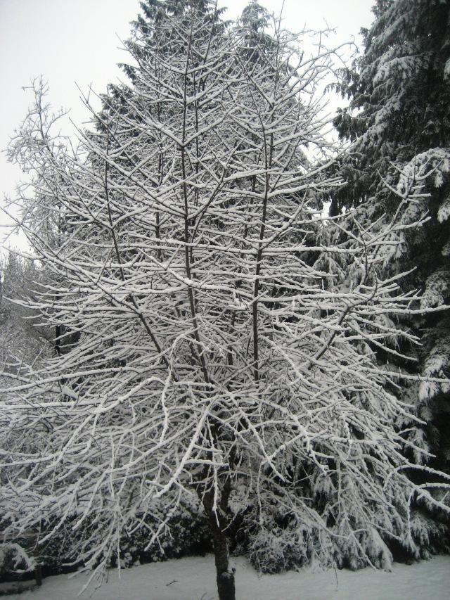 1 morning's snow