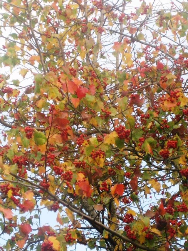 november tree before