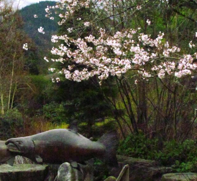 salmon blossoms