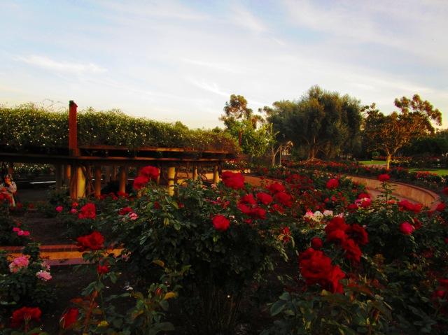 Rose Garden in Balboa Park