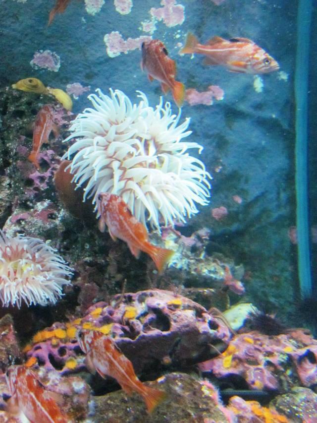 Seattle Aquarium 2012