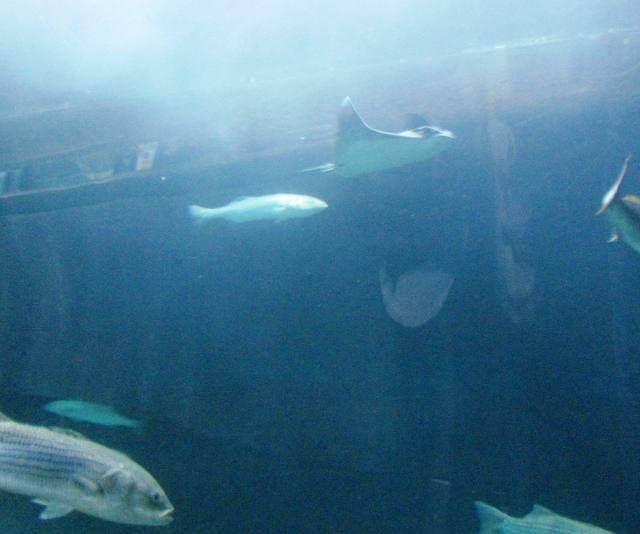 SF Aquarium 2013