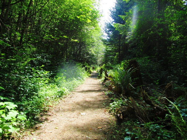 Stumped Path