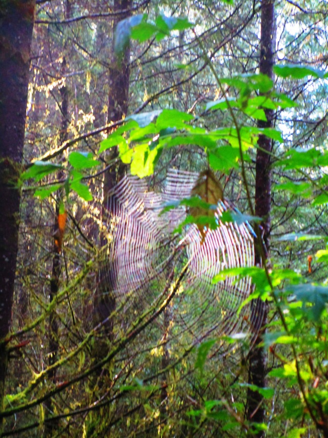 Spider Web on the Trail 2015