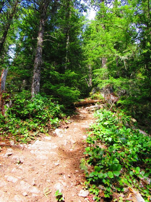 Off the Beaten Path on Teneriffe